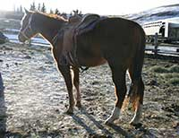 2012 Firewater Flit - Jet Deck filly for sale
